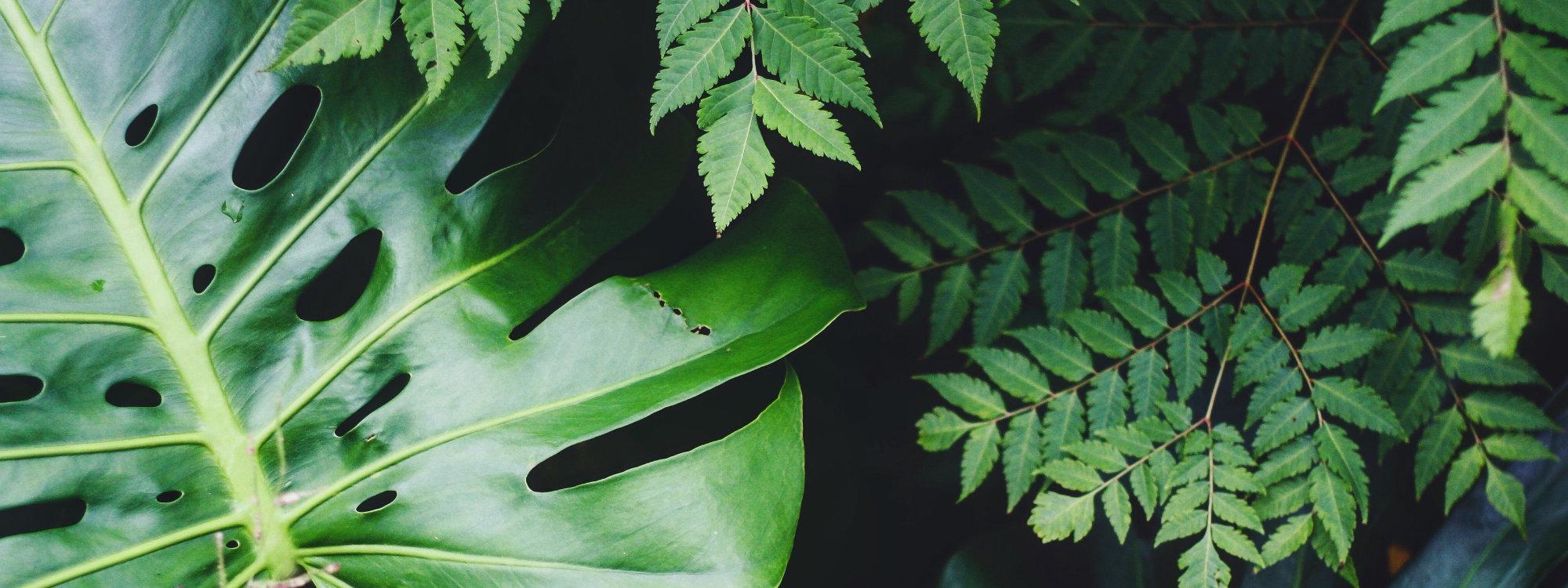 Europe's largest range of indoor and outdoor plants